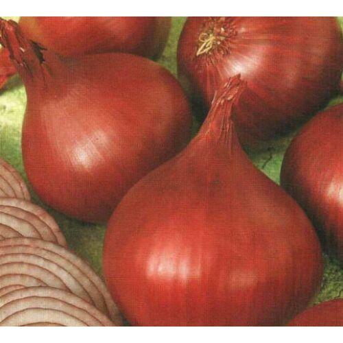 Red   Rum   (lila) 10.000 szem
