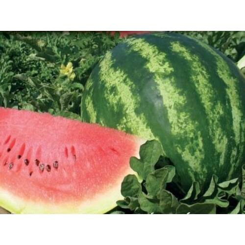 Crimson Sweet görögdinnye vetőmag 1 kg